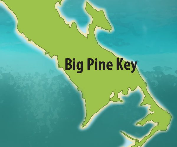 """big pine key single men One florida times-union article dated april 11, 1907 was, """"the extension camp at big pine key, which is the largest now in operation, will be broken up this week and the entire force of nearly 400 men will be moved to sugarloaf key where a new camp will be established."""